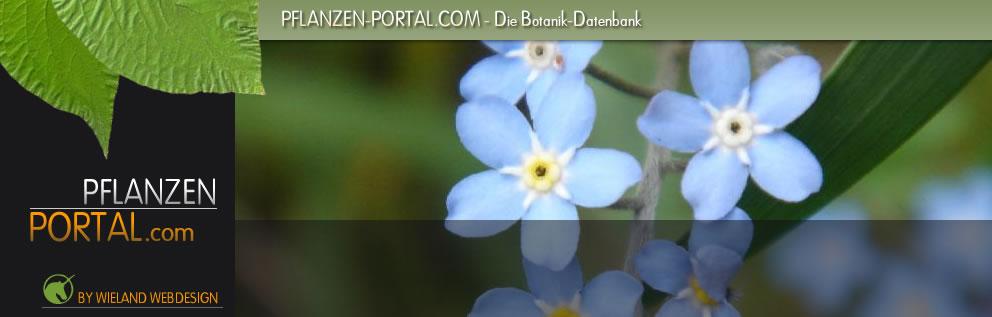 Pflanzen-Portal.com - Die Botanik und Garten-Datenbank